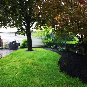 Sod and planting